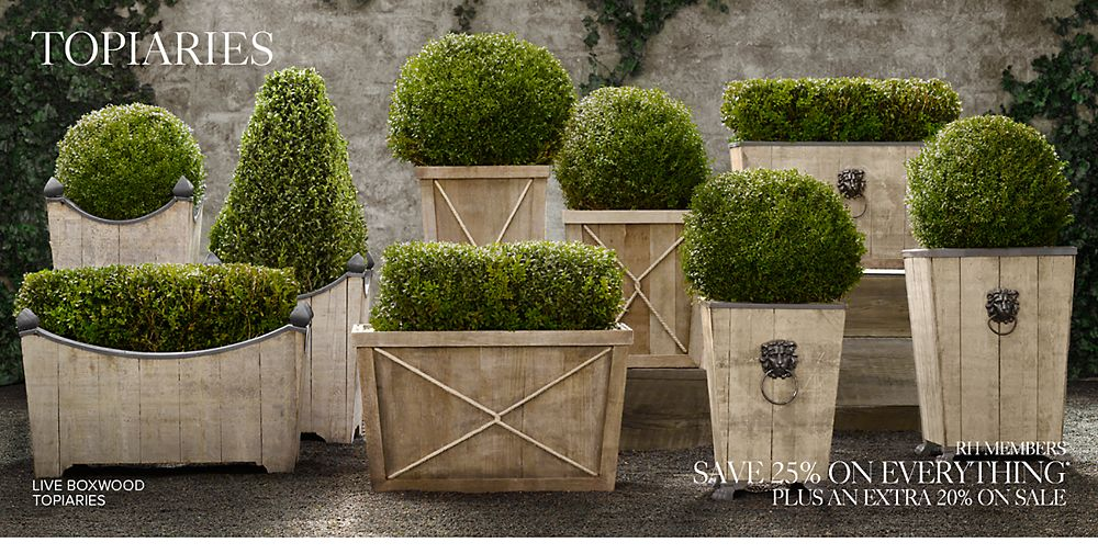 Shop Outdoor Topiaries